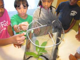 Children look at the one monarch pupa at the Boston Nature Center this year.