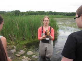 Students from Qualters Middle School in Mansfield joined Mass Audubon to release two Blandings turtles into the Great Meadows National Wildlife Refuge on Monday.