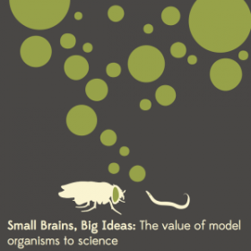 Small brains, big ideas logo