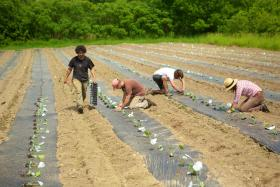 The Farm School, in Athol, Mass., gives aspiring farmers a year's worth of instruction in growing field crops, caring for farm animals and running a business.