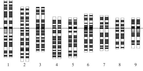 idealized human karyotype