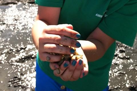 Student Elizabeth Foley with seed clams on Thompson Island.