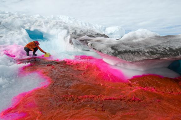 Scientists use harmless but eye-catching red dye to track the flow of meltwater.