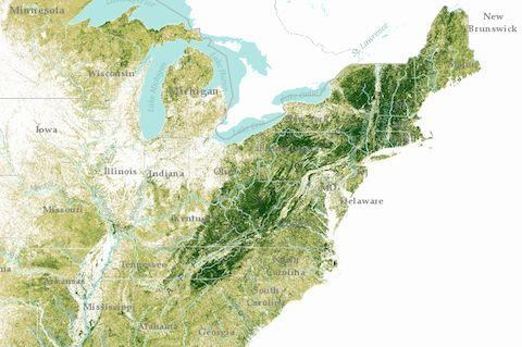 Forest biomass in the northeast U.S.
