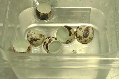 Myhrvold's quail eggs, cooked in a warm water bath.