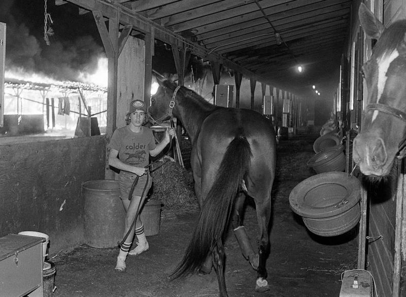Evacuating horses from a burning stable at Suffolk Downs.