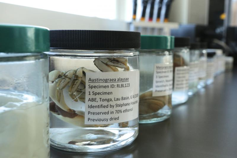 Examples of ocean organisms provide positive identification, even if species names change or information is lost..