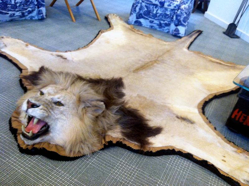 Ernest Hemingway's son Patrick shot this lion in Africa. The rug sits in the center of the Hemingway Room at the JFK Library and Museum.