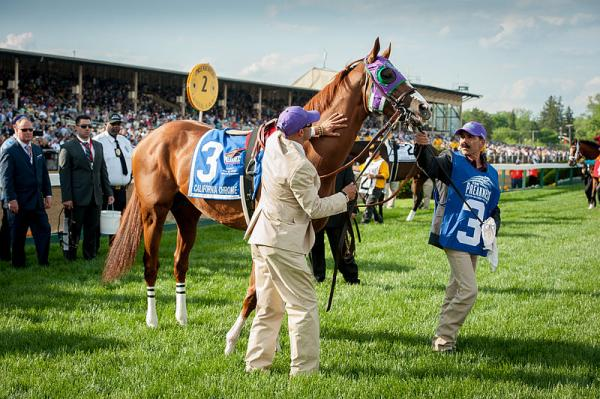 California Chrome at the 2014 Preakness Stakes.