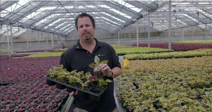 Bruce Knox of Knox Nursery in a video submitted to the state as part of his medical marijuana application.
