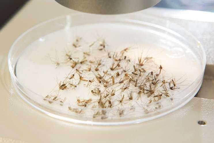 The Aedes aegypti mosquitoes that can spread Zika are native to Florida.