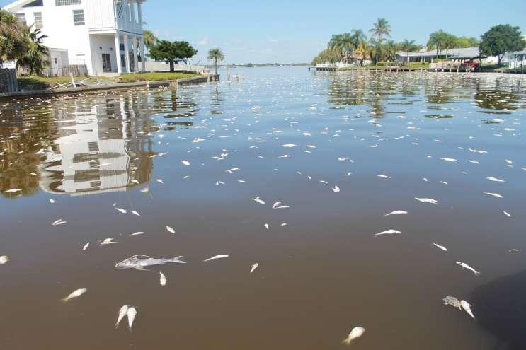 The fish kill in March was only the latest in a series of setbacks for the Indian River Lagoon.