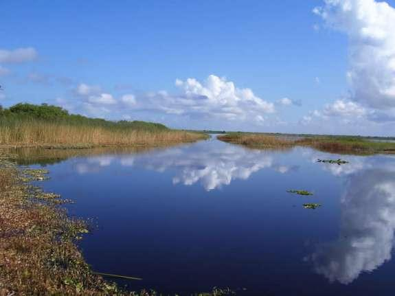 The Indian River Lagoon is among Florida's hardest-hit water bodies.