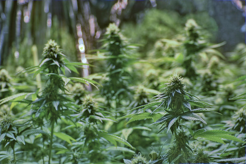 Oklahoma residents voted June 26 to legalize medical marijuana in one of the least restrictive laws in the United States.