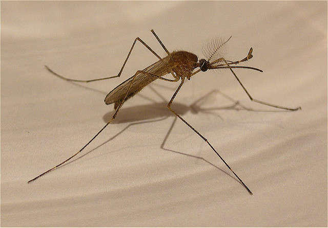 Anti-parasite medicine could be used to stop malaria and Zika from spreading in humans.