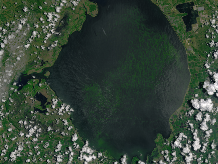 Algae blooms can be seen from this NASA satallite image in 2016.