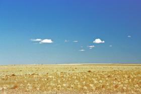 Field of tumbleweeds under a sky with stray clouds.  Wallace County KS, 2002.
