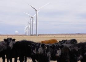 Hereford Wind Project, Hereford, Texas