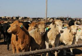 After years of drought, the central and northern Plains have seen a rise in cattle feedlots.