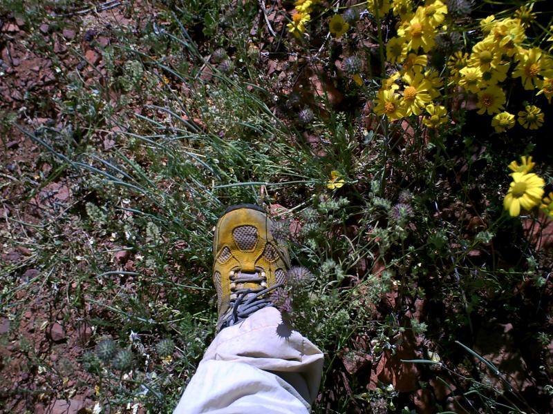 Hiking Boot Covered with Pollen