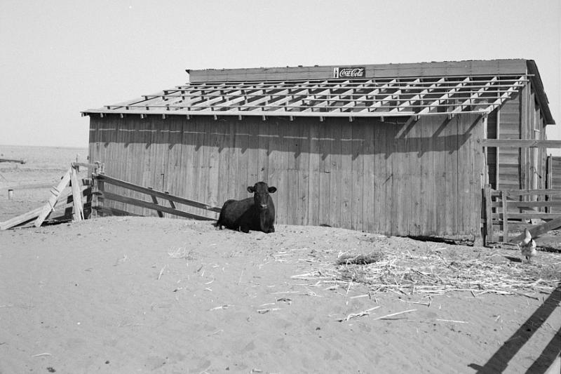 This farmer took the roof off his barn to make a windbreak for his garden. There was no rain. Cimarron County, Oklahoma