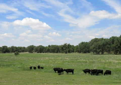 On the Fox Ranch, outside Yuma County, Colo., Andrews keeps his cattle moving.