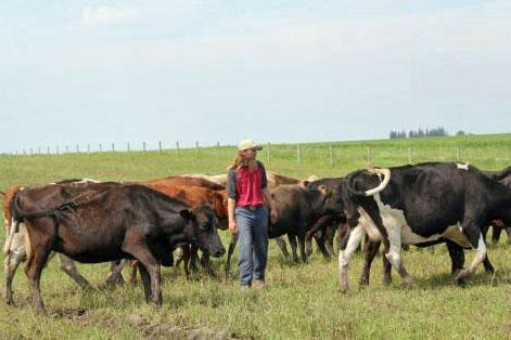 Devan Green walks among his cattle on the pasture land he rents from his family