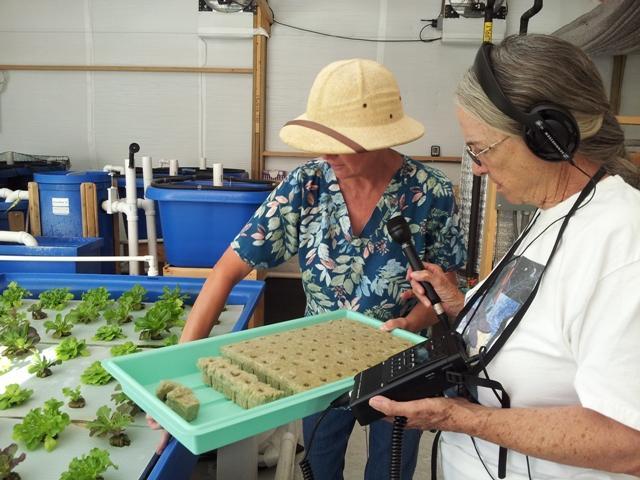Alice shows Skip the lettuce plugs