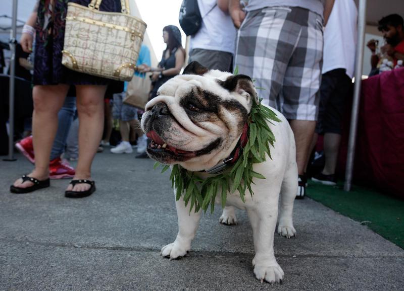Stoned dog