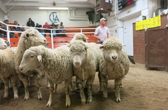 As lamb sales fall, ranchers and retailers are being encouraged to reach out to a more diverse set of consumers.