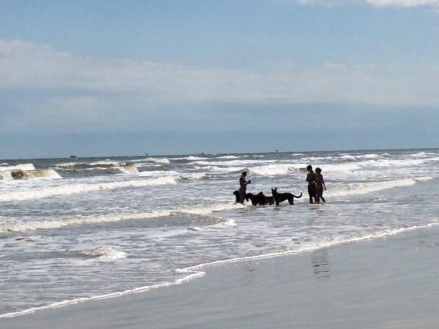 Hello Gulf of Mexico!