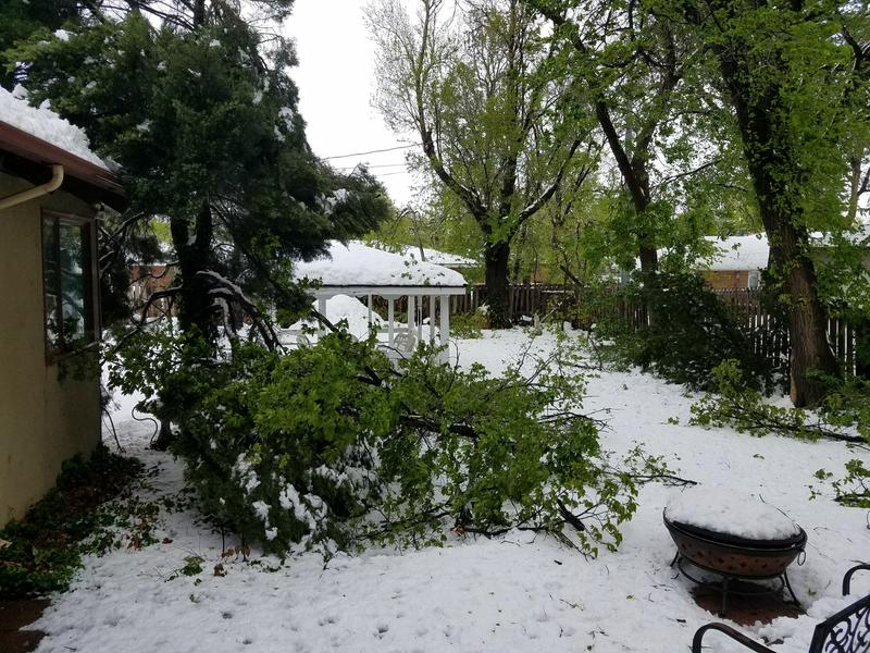 Trees in residential areas across Garden City sustained major damage from heavy snowfall that fell over the weekend.