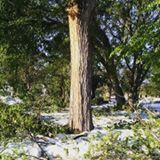 A large number of trees in Garden City's Stevens Park were damaged by 12 inches of snowfall that fell over the weekend.