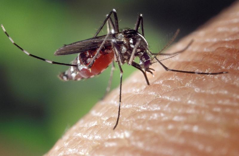 In Amarillo, Mosquito Battle Continues Despite Late Date ...