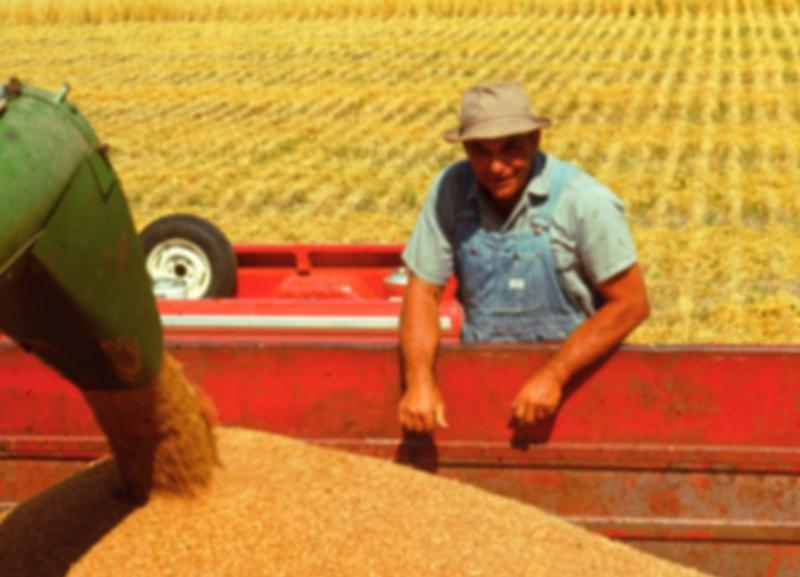 Julene's father, Harold Bair, during harvest at their northwest Kansas farm.