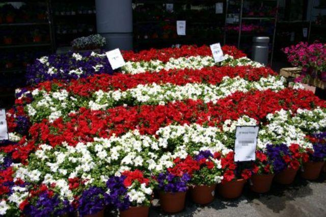 Flag red with white flower gallery flower decoration ideas red flag white flower choice image flower decoration ideas red flag with white flower images flower mightylinksfo