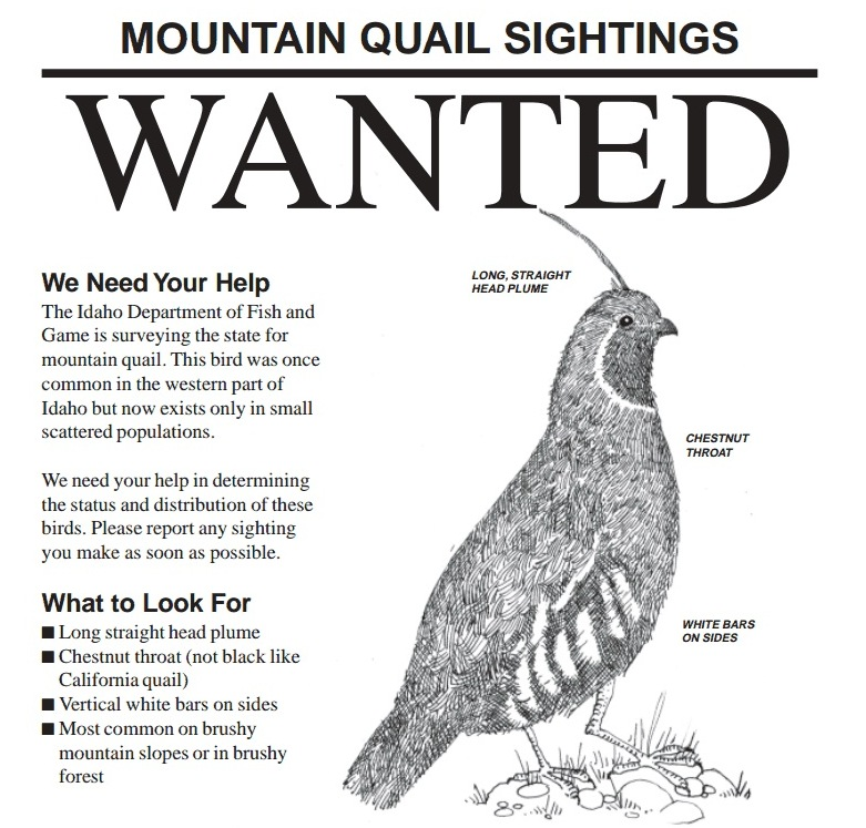 Idaho s only native quail is almost gone boise state for Idaho dept of fish and game