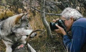 Jim Dutcher gets close with a wolf from the Sawtooth Pack.