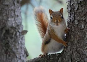 squirrel, fire, forests