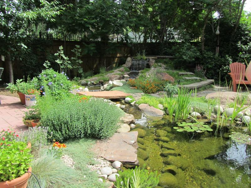 Fish, birds, and people can all enjoy Theresa Madrid's backyard garden