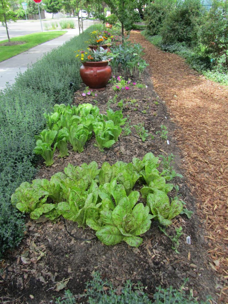 Theresa Madrid's front and side yard are dedicated to her ornamental food garden