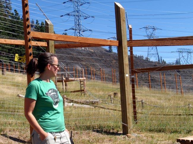 Chimpanzee Sanctuary NW exec. director Sarah Baeckler looks at the partially charred outdoor chimp enclosure.