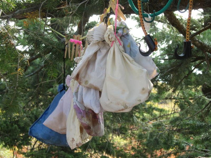 Once caught, each bird is placed in a soft cloth bag to keep it calm.