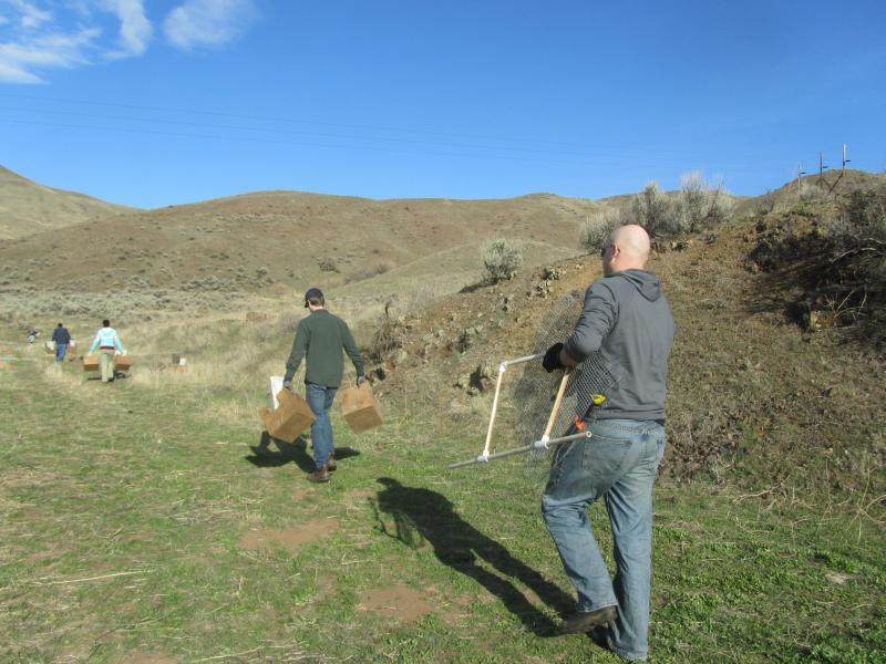 Volunteers carry equipment to the trans-location site east of Horseshoe Bend.