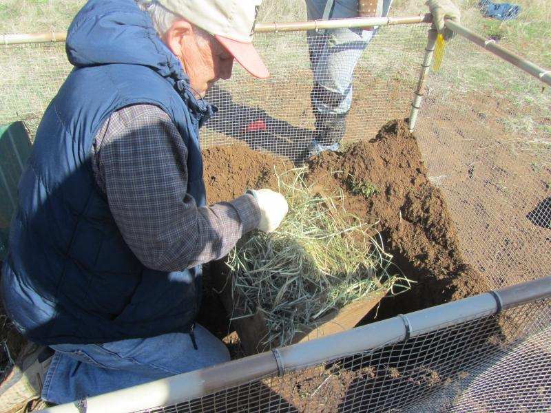 Dr. Yensen stuffs a nest box with hay.  The squirrels will live inside for their first few weeks at their new home.