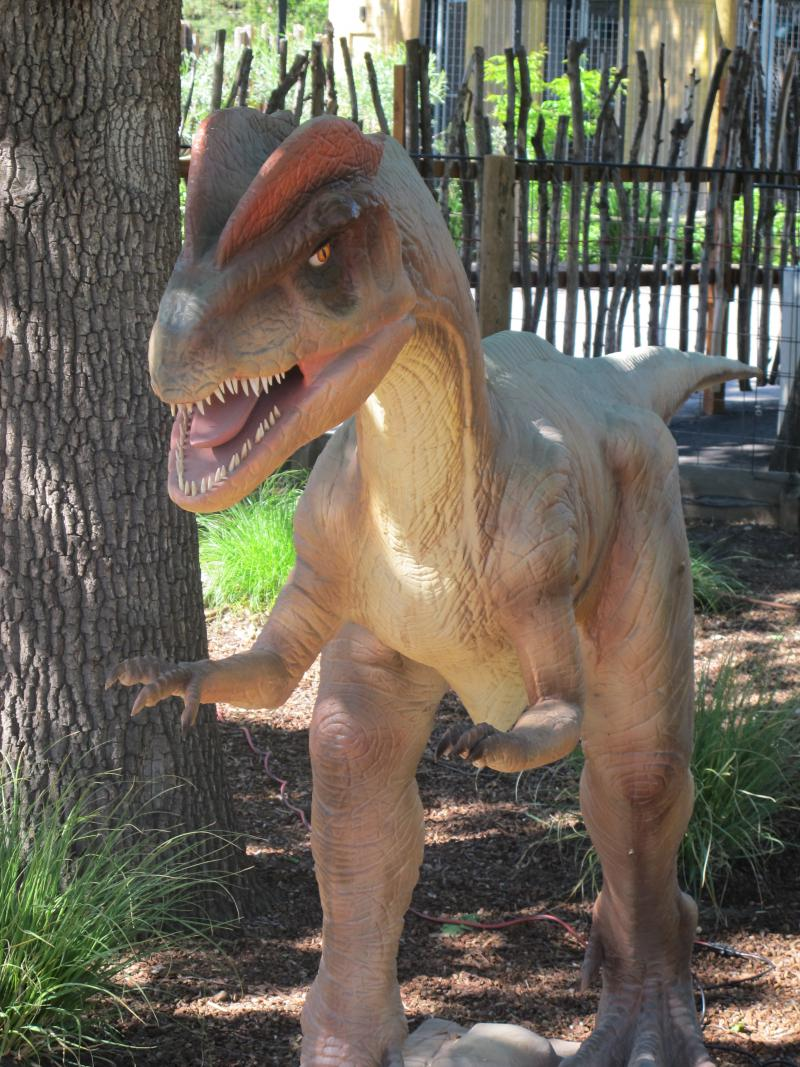 Each dinosaur moves their head, arms, or tail and roars at visitors.
