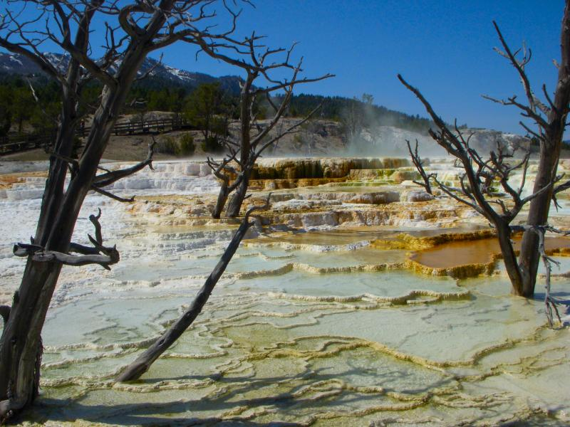 Yellowstone, Mammoth, hot springs