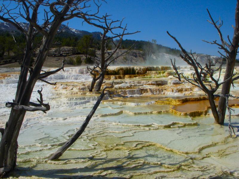 Yellowstone, Mammoth, hot springs