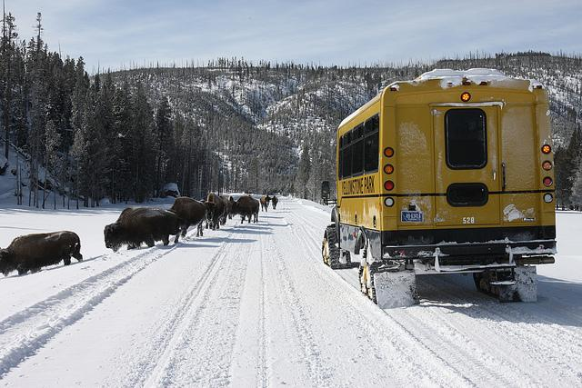 yellowstone, winter, bison, snowcoach