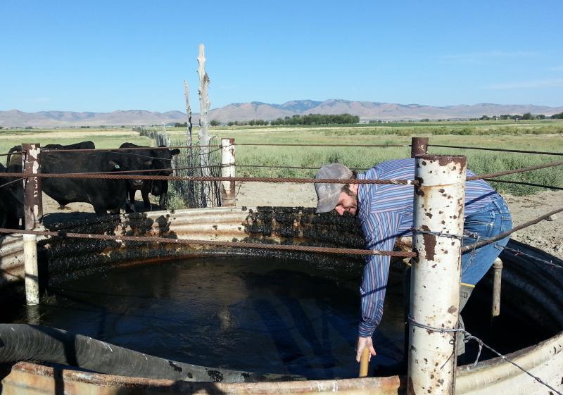 ranching, cattle, trough